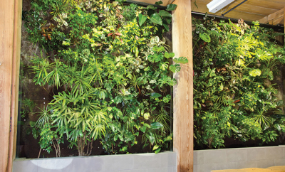 bigstock-Living-Wall-31886141