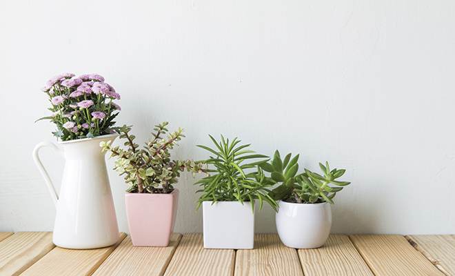 Indoor plants enhance your d cor and improve your health herlife magazine - Plants can improve ambience home ...
